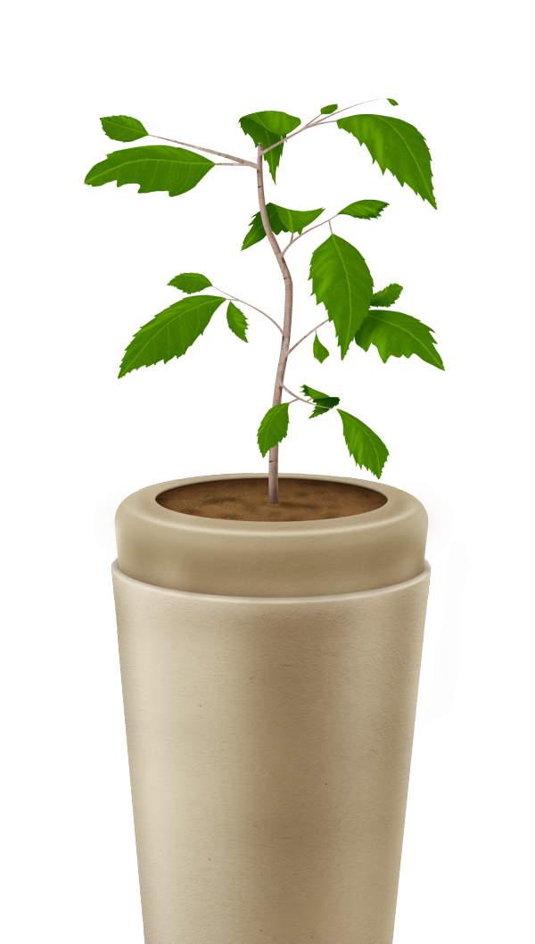 Urna que se convierte en árbol cenizas